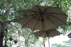 Thailändskt vitt paraply Arkivfoto