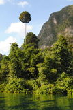 Thailand öar - jungle5 Royaltyfri Bild