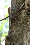Thailand ödla på den bruna trädstammen royaltyfri foto