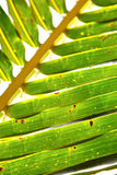 Thailand   abstract  in the light  leaf   veins background Royalty Free Stock Image