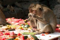 Thailand-Affe-Partei (Thailand-Affe-Buffet) Lizenzfreie Stockfotos