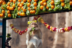 Thailand-Affe-Partei (Thailand-Affe-Buffet) Stockbilder