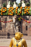 Thailand-Affe-Partei (Thailand-Affe-Buffet) Stockfoto