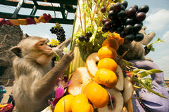 Thailand-Affe-Partei (Thailand-Affe-Buffet) Lizenzfreies Stockfoto