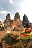 Thailand-Affe-Partei (Thailand-Affe-Buffet) Stockfotos