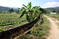 Thailand Agriculture with Irrigation Canal stock photography