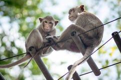 Thailand albert die Familie herum, die zusammen sitzt Stockfotos