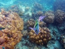 Thailand Andaman undersea landscape. Eastphoto, tukuchina,  Thailand Andaman undersea landscape Stock Photography