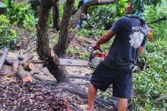 THAILAND-AUGUST,16 :Young man cutting wood to be used as firewood. THAILAND AUGUST,16 2017.  Royalty Free Stock Photo