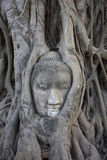 THAILAND, Ayutthaya, Buddha statue Royalty Free Stock Photos