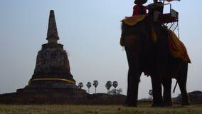 Thailand, Ayutthaya, 25 Feb 2018. Elephant riding in Ayutthaya. The tourist rode on elephant back to see the Pra Nakorn. Thailand, Ayutthaya, 25 Feb 2018 stock video