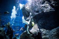 THAILAND BANGHOK 2013 MAART 29 scuba-duikers geniet van Royalty-vrije Stock Foto's