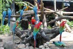 Thailand Bangkok parrots of Ara Stock Image