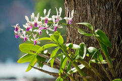 Thailand. Beautiful tropical nature in Thailand Stock Photos