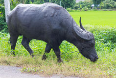 Thailand black buffalo grazing. Royalty Free Stock Photo
