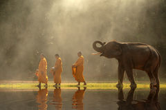 Thailand Buddhist monks walk collecting alms with elephant is tr Royalty Free Stock Photos