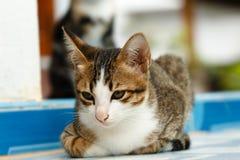 Thailand cats Royalty Free Stock Photo