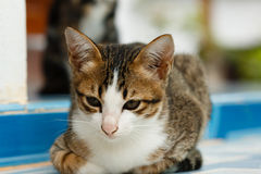 Thailand cats Stock Photography