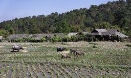 Thailand, Chiang Mai, Baan Tong Luang, Karen villa Stock Image