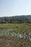 Thailand, Chiang Mai, Karen Long Neck village royalty free stock image
