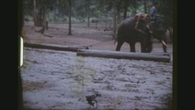 Elephants Pulling Logs. THAILAND, CHIANG MAI PROVINCE, DECEMBER 1983. Three Shot Sequence Of Mahouts Riding On Log Pulling Working Elephants, Demonstrating The stock video footage