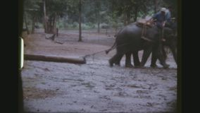 Elephants dragging trunks. Thailand, Chiang Mai Province, December 1983. Two shot sequence of mahouts riding on working elephants, dragging tree trunks on long stock video