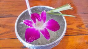 Thailand citrongräs royaltyfri bild