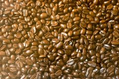 Thailand Coffee Beans for Coffee Lover. Many Thai Coffee Beans are mixed together at the same place Royalty Free Stock Images