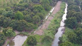 Thailand countryside aerial view shot stock footage