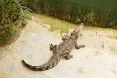 THAILAND Crocodile Farm and Zoo Stock Photos