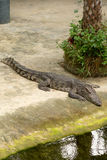 THAILAND Crocodile Farm and Zoo Royalty Free Stock Photo