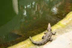 THAILAND Crocodile Farm and Zoo Royalty Free Stock Image