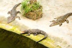 THAILAND Crocodile Farm and Zoo Stock Photography