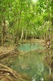 Thailand djungeldamm Arkivbild