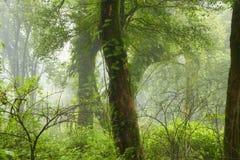 Thailand-Dschungel Lizenzfreie Stockfotos