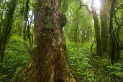 Thailand-Dschungel Stockfotografie