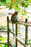 Thailand, ein Affe sitzt auf einem Zaun Lizenzfreie Stockfotos