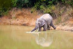 Thailand elefant arkivfoto