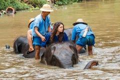 Thailand elefant med mahouten, mitt för Thailand elefantbeskydd Arkivbild