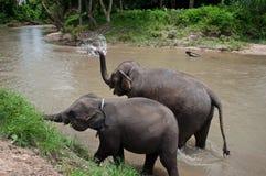 Thailand elefanter Royaltyfri Fotografi