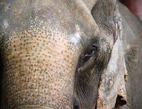 Thailand elephant Royalty Free Stock Photo