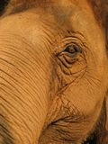 Thailand Elephant Mahout Royalty Free Stock Photography