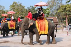 Thailand elephant ride Royalty Free Stock Photography