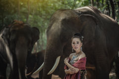 Thailand elephant Stock Photography
