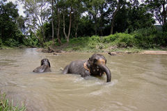 Thailand elephants splash Royalty Free Stock Photos