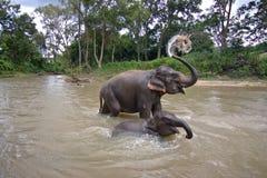 Thailand elephants splash stock photography
