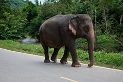Thailand elephants Stock Photos