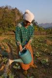 Thailand en gammal thailändsk bondaktig kvinna som bevattnas hennes grönsakträdgård Royaltyfri Bild