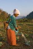 Thailand en gammal thailändsk bondaktig kvinna som bevattnas hennes grönsakträdgård Arkivbilder