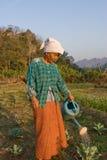 Thailand en gammal thailändsk bondaktig kvinna som bevattnas hennes grönsakträdgård Royaltyfri Fotografi